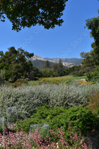 Fotobehang Khaki California Foothills with Wildflowers Growing in a Meadow