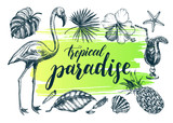 Summer set. Ink hand drawn collection of tropical plants leaves, flowers, seashells, flamingo bird. Botanical tropical elements for design with brush calligraphy style lettering, Vector illustration. - 209785166
