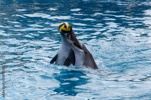 Gra w delfiny