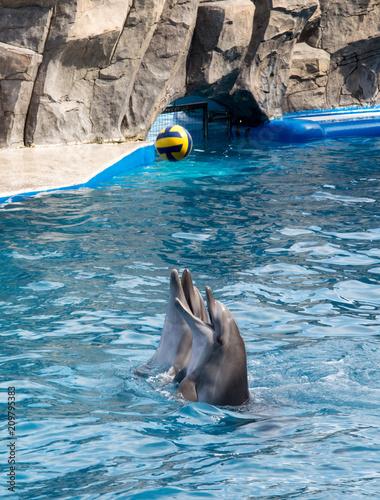 Foto Spatwand Dolfijn Dolphins playing