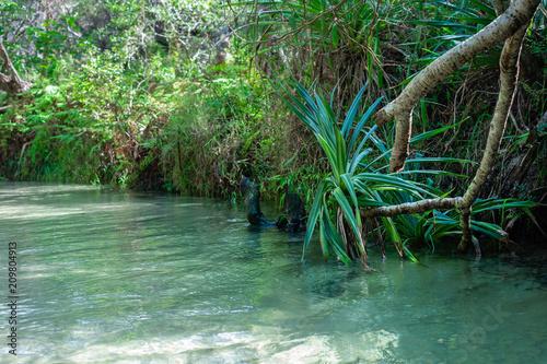 Foto Murales freshwater stream, Eli Creek, Fraser Island