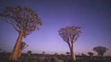 Time lapse in Namibia over the Quiver Tree's. Pure beauty in the Africa bush lands. Sun setting and Milky Way rising - 209808977