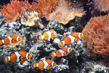Sea anemone and clown fish - 209824577
