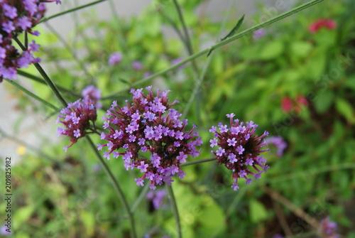 Aluminium Lavendel SONY DSC