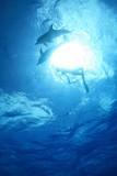 イルカと泳ぐ - 209826762
