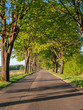 Country road perspective with trees on the sides