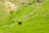 Breathtaking scenery with donkey grazing on a summer day on a green meadow in a countryside in Moldova, Europe