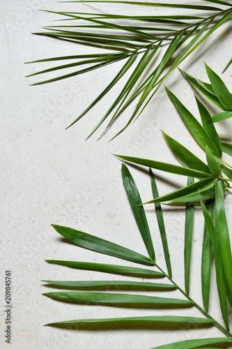 Pomysł kreatywny minimalny lato. Zielone gałązki liści. Liście palmowe. Tropikalny egzotyczny tło z pustą przestrzenią dla teksta. Pojęcie twórczej sztuki. Płaski lay, widok z góry.