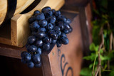 Bunch of ripe grapes dark varieties lying on a wooden barrel. - 209856950