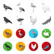 Crow, ostrich, chicken, peacock. Birds set collection icons in monochrome,flat style vector symbol stock illustration web.