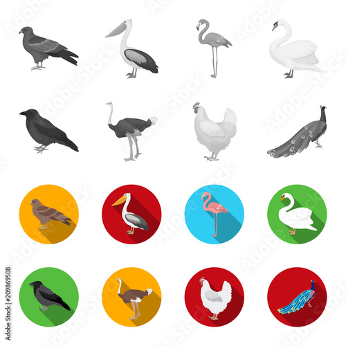 Crow, ostrich, chicken, peacock. Birds set collection icons in monochrome,flat style vector symbol stock illustration web. - 209869508