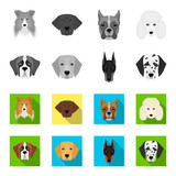Muzzle of different breeds of dogs.Dog of the breed St. Bernard, golden retriever, Doberman, Dalmatian set collection icons in monochrome,flat style vector symbol stock illustration web. - 209869944