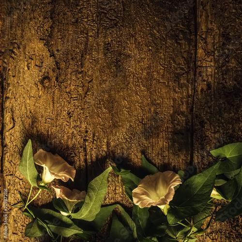 Foto Murales Perennial vine flower romantic card