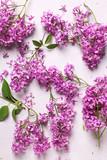 Fresh violet lilac flowers - 209879736