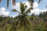 Palm Tree - 209884710
