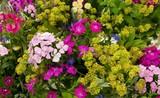 Sommerblumen Blumenstrauß