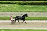 horse racing, horse racing, horses, jockey, horseman, Hippodrome,bets, reins, harness, - 209891396