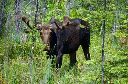 Foto Murales wildlife in Algonquin provincial park