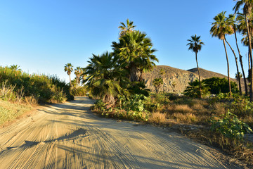 morning on beach roads in tropical Baja, Mexico