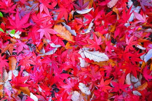 Fotobehang Rood traf. 紅葉の公園の風景25