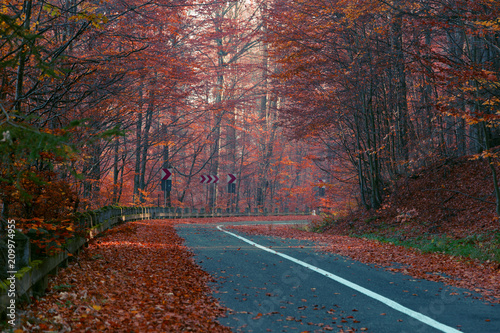 Aluminium Diepbruine Road in autumn forest with red leaves trees