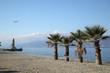 Palme in spiaggia sul lungomare di Reggio Calabria