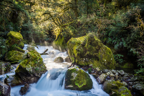 Marian Creek, Fiordland National Park - New Zealand - 209993122
