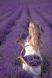 Beautiful girl on lavender field. Attractive pretty blonde woman with basket at sunset. Nature violet background. - 210005195
