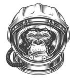 Head of gorilla - 210006107