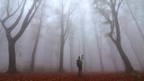 Male photographer searching for a photo inside creepy foggy forest in a moody rainy autumn day