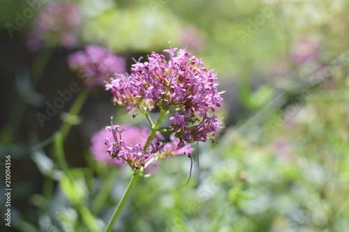 Aluminium Lavendel fleur comptoir general