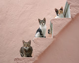 Three cats on a pink stairway, Chios, Greece, Europe