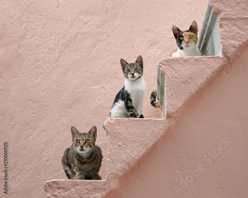 Three cats on a pink stairway, Chios, Greece, Europe  - 210066920