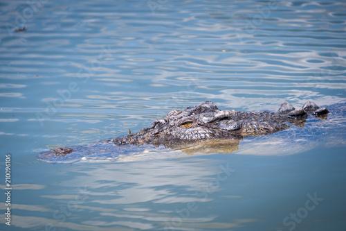 Foto Murales Cruising croc, Northern Territory