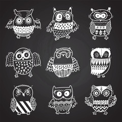Cartoon owls in chalkboard background. Vector illustration