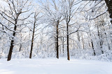 oaks at snow-covered glade in forest in winter - 210138144