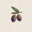 Olive illustration. Ripe olives and leaves on a worn background. Style engraving.