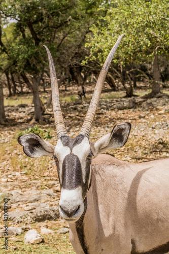 Naklejka African Safari Animals