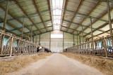 Breeding farm for milk cows