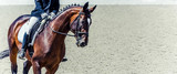 Dressage horse and rider. Sorrel horse portrait during dressage competition. Advanced dressage test. Copy space for your text.  - 210186516