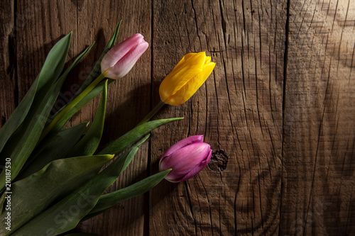 bouquet of tulips - 210187530