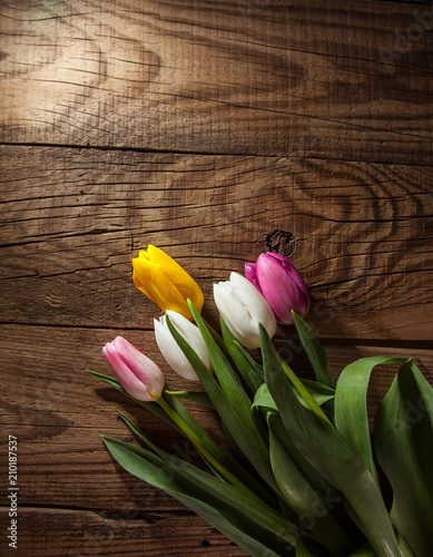 bouquet of tulips - 210187537