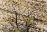 Rock layers and trees at Capital Reef National Park, Utah