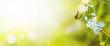 Leinwanddruck Bild - Wunderschöner Schmetterling