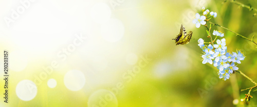 Leinwandbild Motiv Wunderschöner Schmetterling
