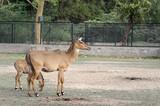 Two deers - 210204112