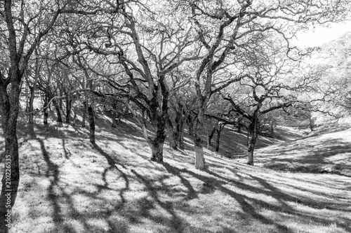 Aluminium Wit tree grove with shadows