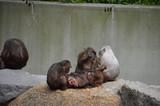 caring monkeys - 210239318