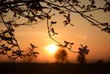 Morgensonne - 210271909