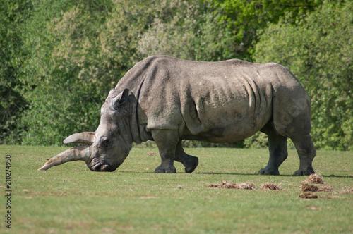 Fotobehang Neushoorn Rhinocéros à Planète sauvage